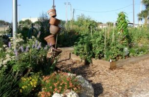 Lincolnville Community Garden